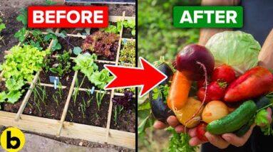 8 Helpful Tips To Start Your Own Vegetable Garden