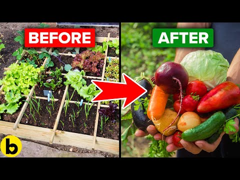 8 Helpful Tips To Start Your Own Vegetable Garden